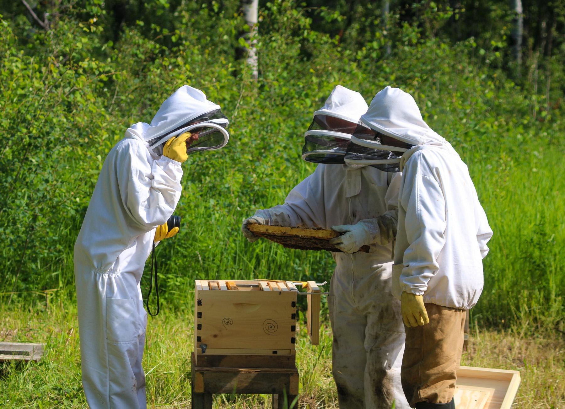Das da links bin ich im Bienenanzug. Gemeinsam mit Guy und Paul suche ich nach der Königin.