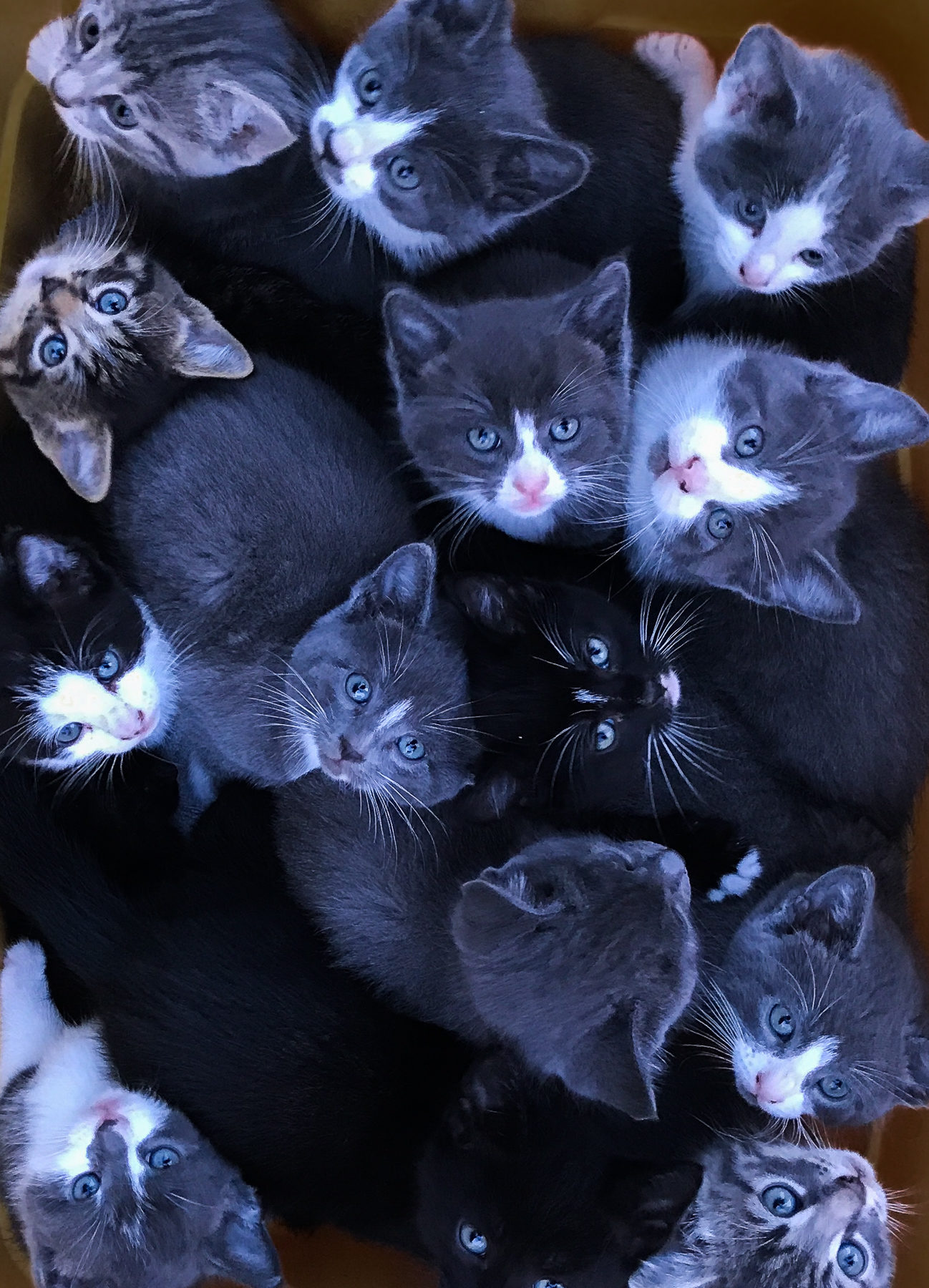 Wanna cuddle? In summer there were 16 baby cats to feed. An exceptional state for the Fletchers.