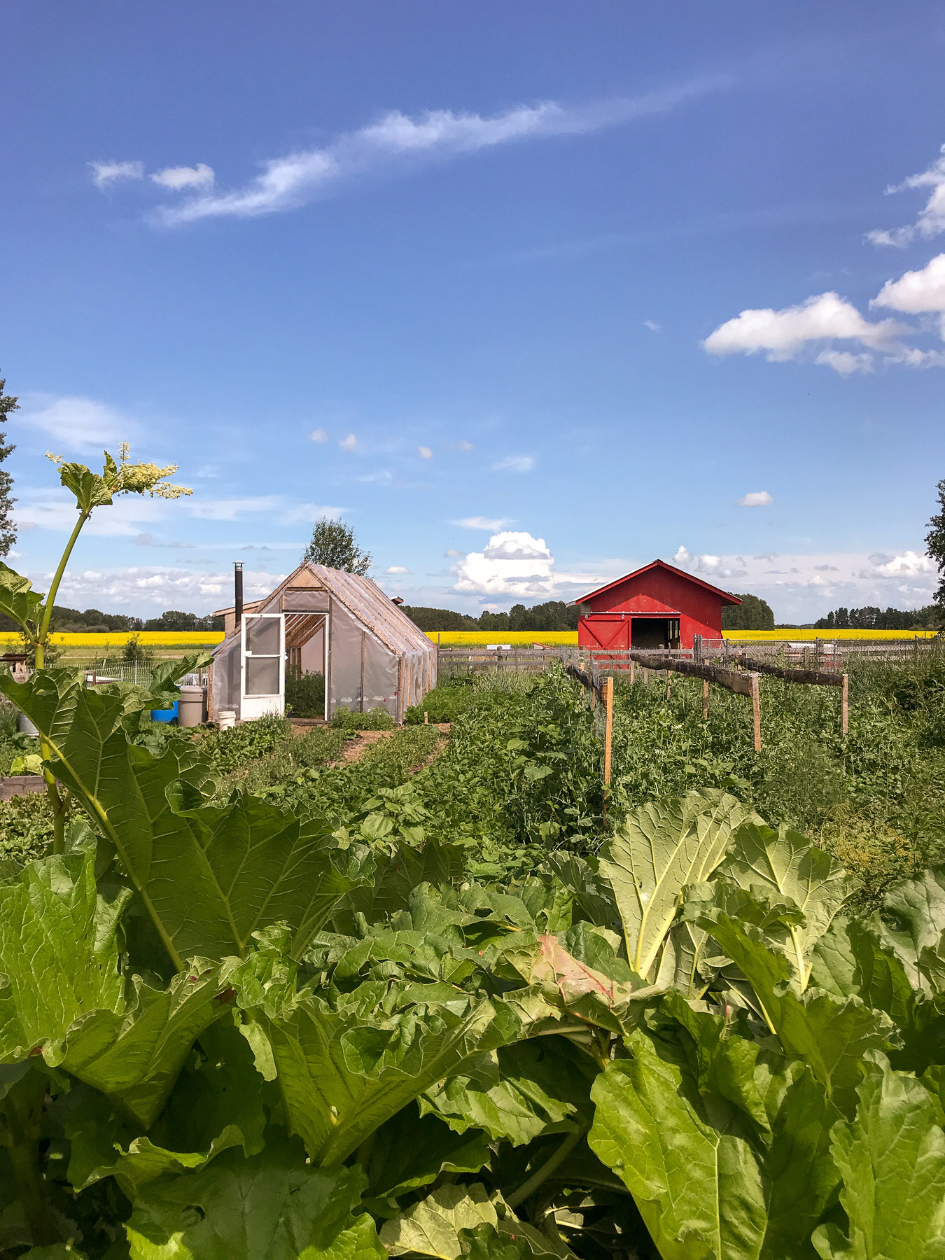 A look in the vegetable garden.