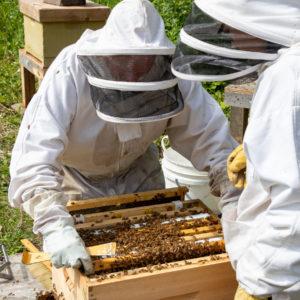 Guy und Paul inspizieren die Bienenstöcke, um sicherzustellen, dass es den Bienen und ihrer Königin gut geht.