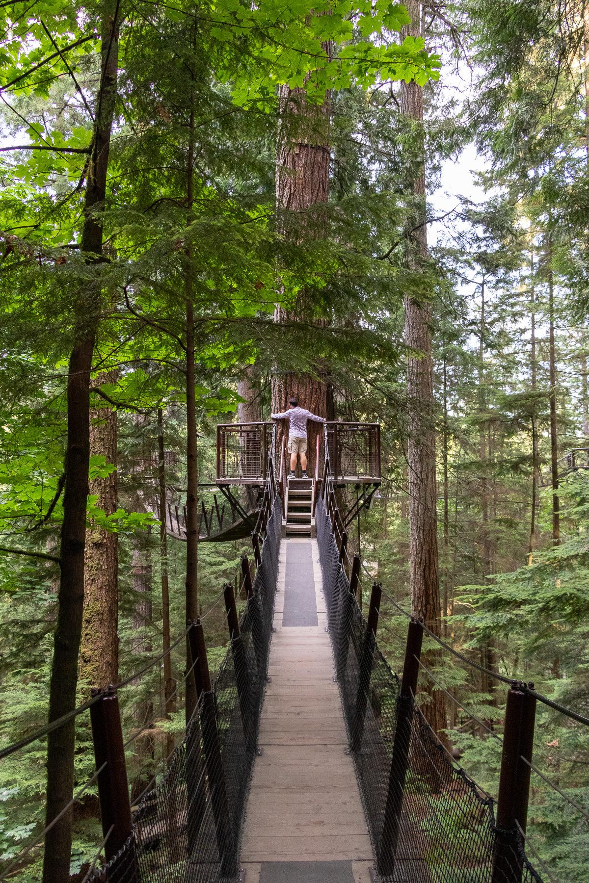 Zwischen mächtigen Douglas-Fichten wandert man auf etwa 30 Metern Höhe durch die Bäume und kommt hier wie Ben ganz in Kontakt mit der Natur.