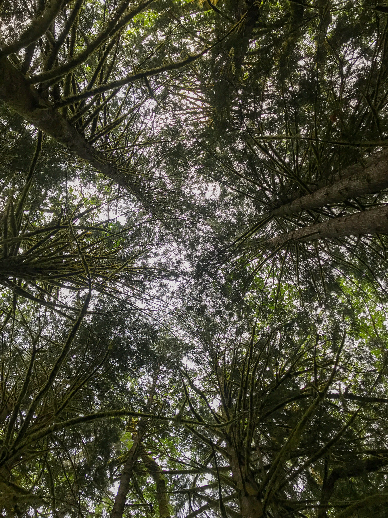Ein Blick hoch hinauf in die Baumwipfel.
