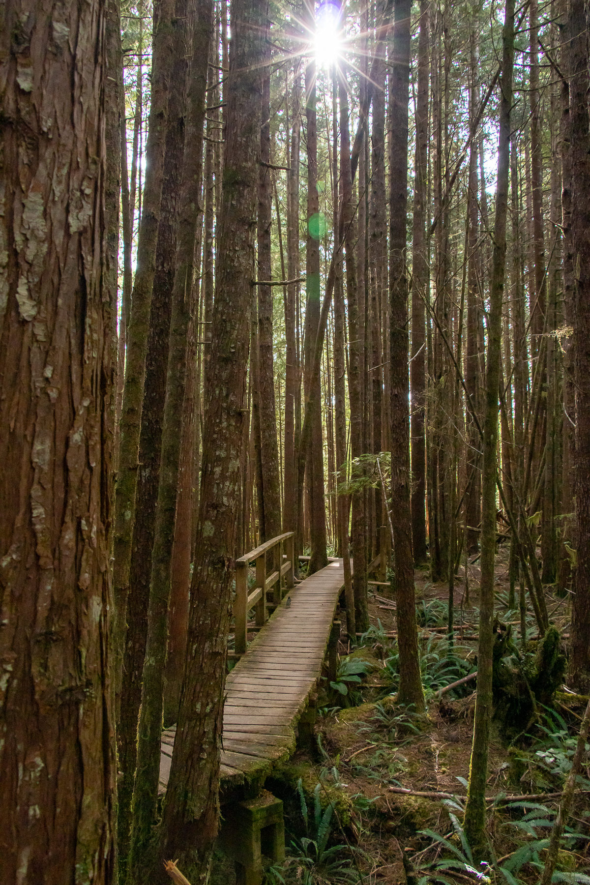 A wooden walkway leads through the forest on the west coast of Canada.