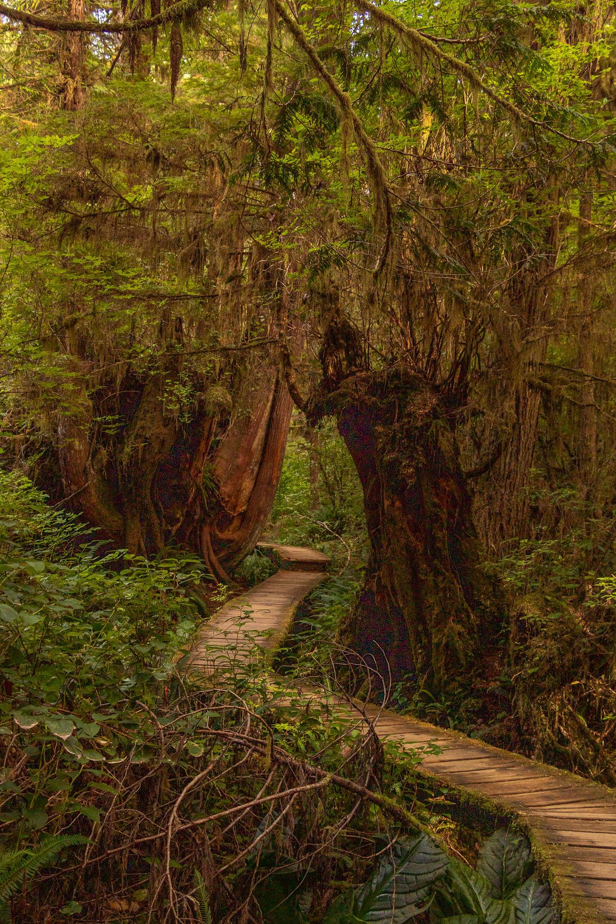 Irgendwie mystisch, dieser Weg durch den Wald an der Kanadischen Westküste.