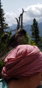 Picknick über der Baumgrenze - das finden auch die Vögel super.