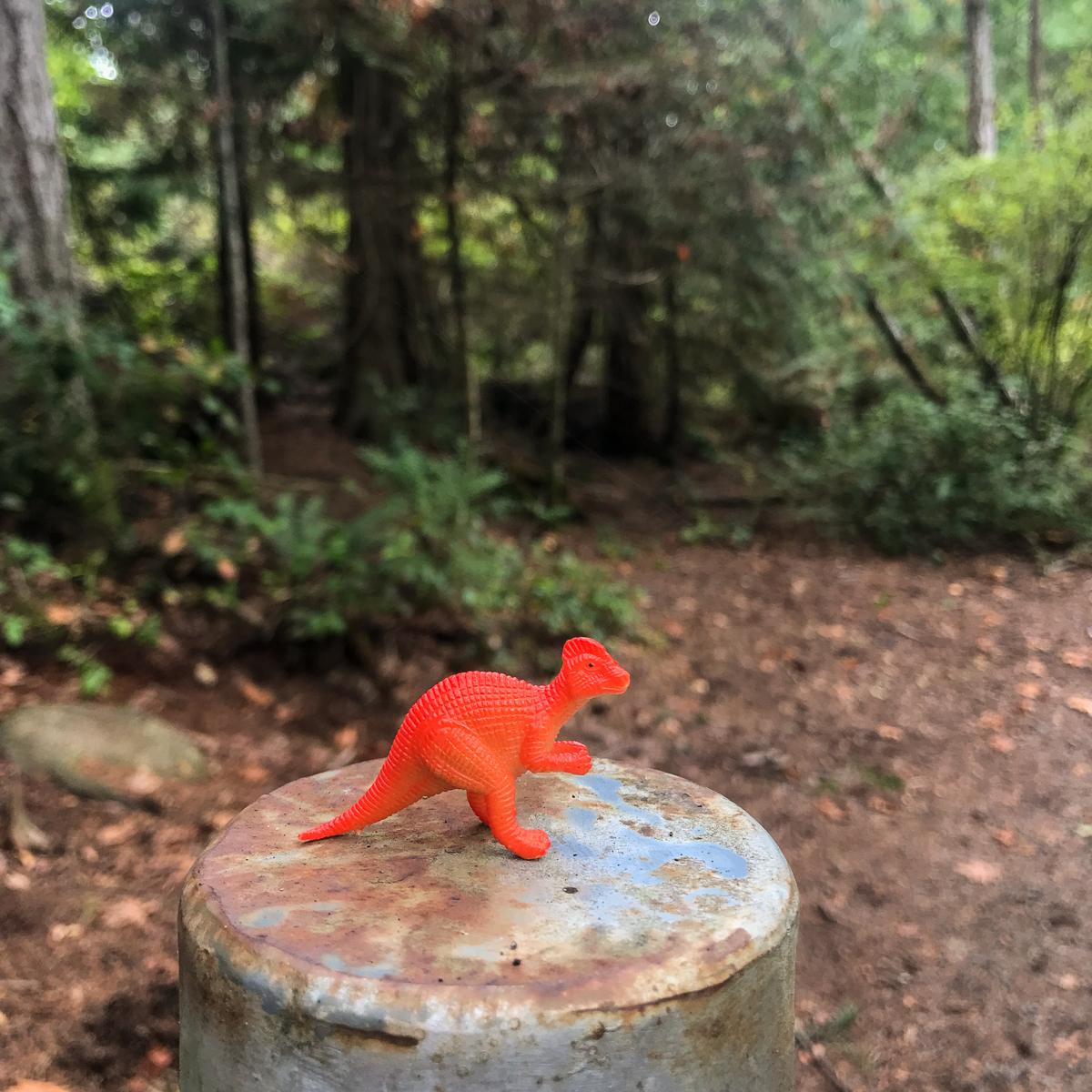 Kleine Tierchen wie dieses hier finden Wanderer am Wegesrand und in Baumritzen.