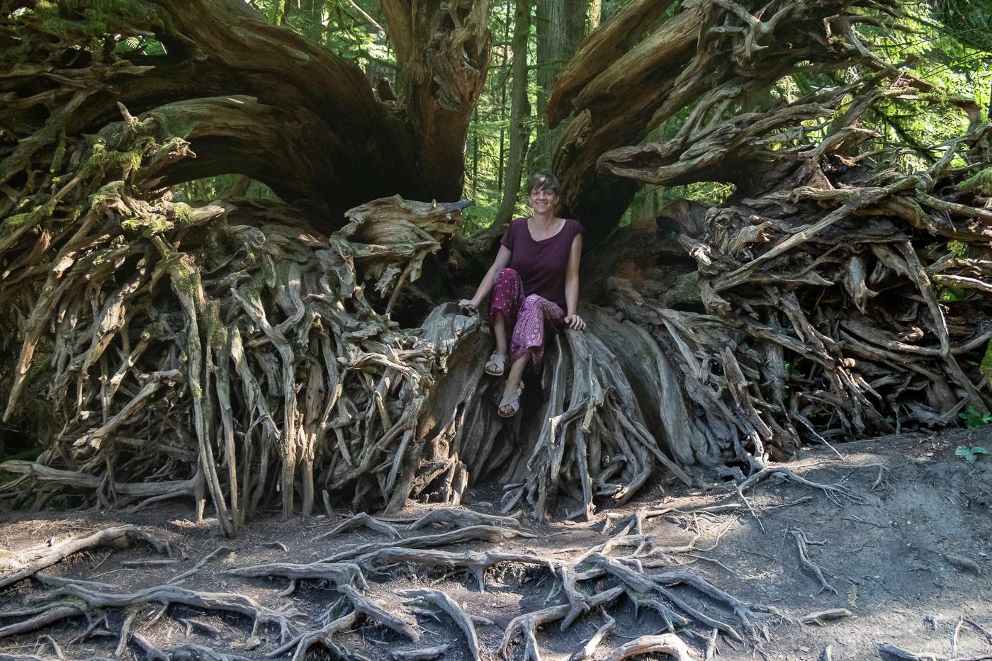 Die Wurzel dieses umgestürzten Baums ist ein beliebter Fotoplatz.