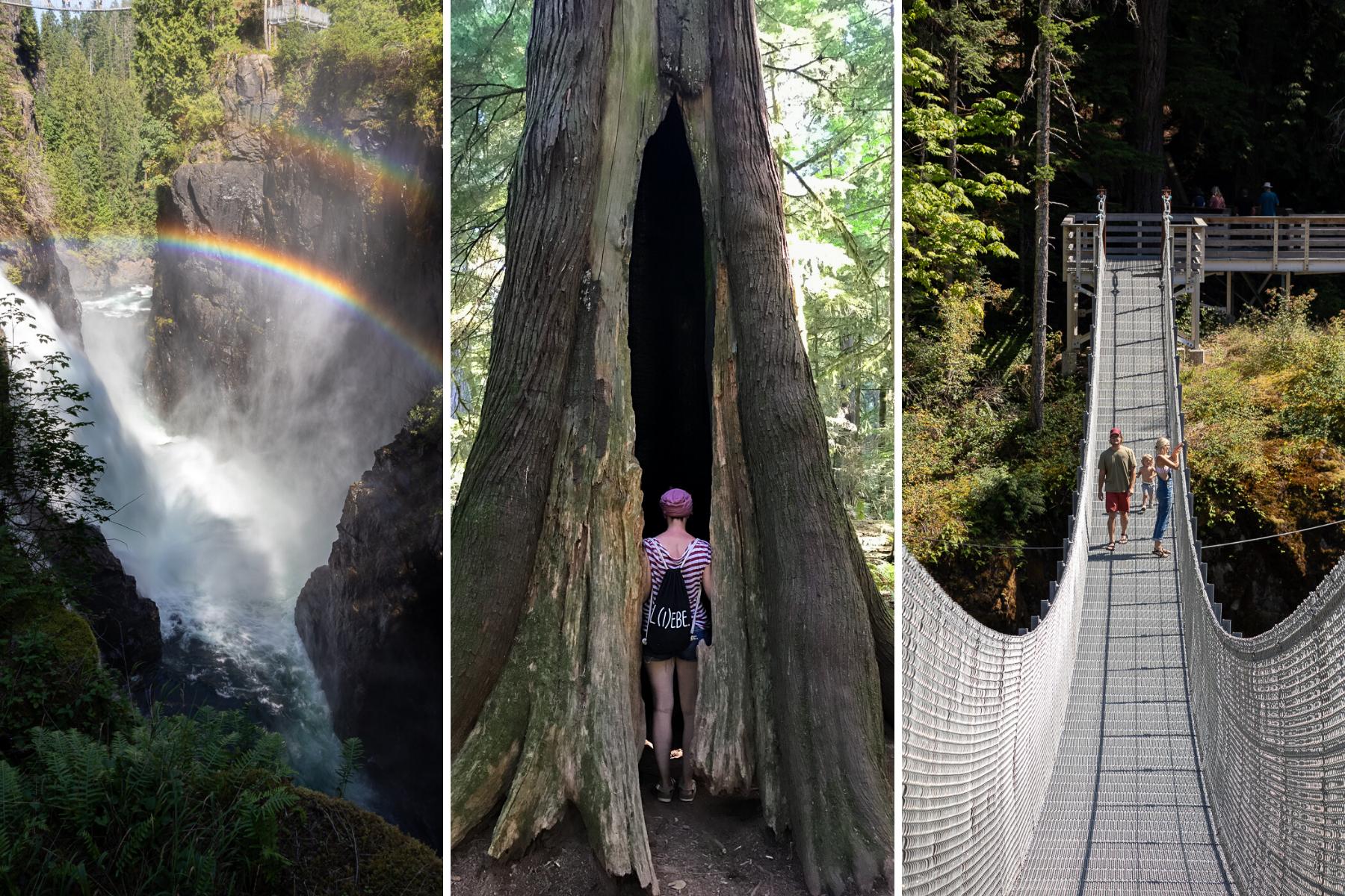 Ein doppelter Regenbogen über den Elk Falls, ein Baum so groß, dass ich darin stehen kann, und die 60 Meter lange Hängebrücke.